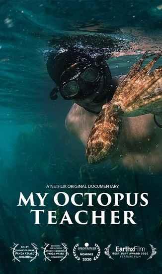 دانلود مستند My Octopus Teacher 2020 معلم اختاپوس من دوبله فارسی